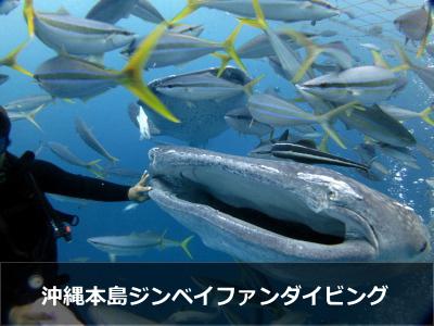 沖縄ジンベイダイビング